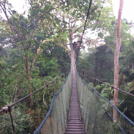 Puerto Maldonado, Peru: Caminata por la selva con tirolesa y puente colgante