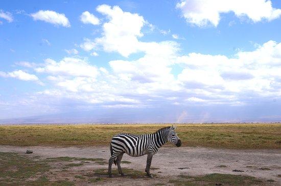 4-Day Masai Mara, L Naivasha and L Nakuru - Private safari: Zebra in massai mara