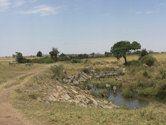 4-Day Masai Mara, L Naivasha and L Nakuru - Private safari: Massai mara
