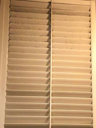 Pittypat's Porch: Dirty window blind above my table