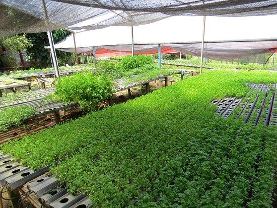 Horta hidroponica, evita desperdicio de água