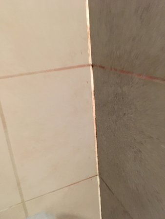 Mould on grout