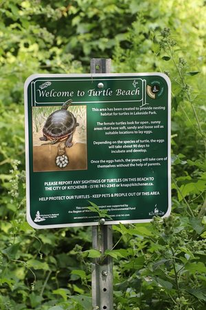 Welcome to the Turtle Beach