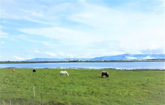 Icelandic horses. The large building on the other side of the bay just to the right of the church is where the President lives. It has no security guards.