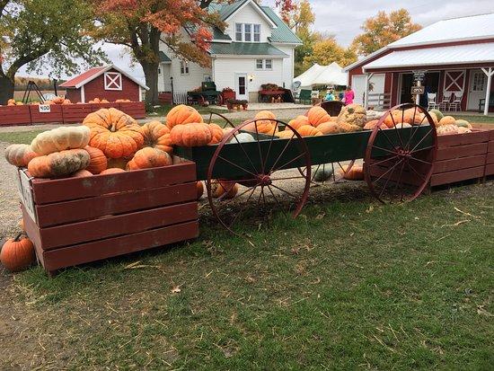Gust Brother's Pumpkin Farm