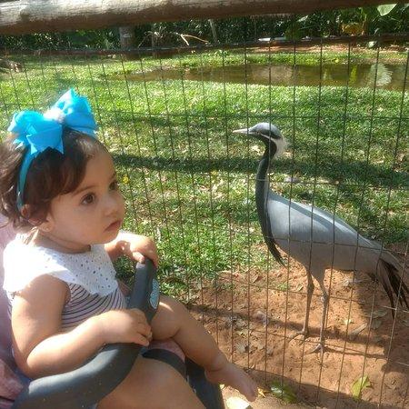Foz do Iguaçu, PR: Parque das aves
