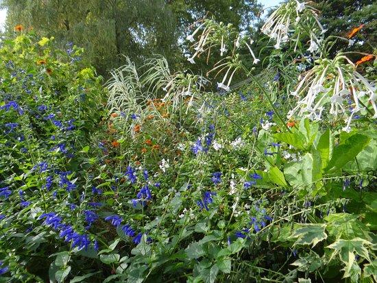 Gardens nearby still in bloom in October
