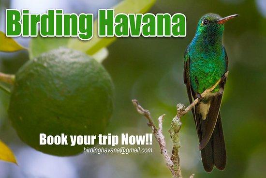 Birding Havana