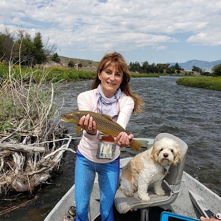 Montana  healthy trout
