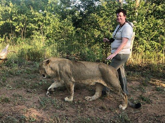 Walk with Lions - Zimbabwe: Pax on the walk