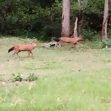 Nagarahole Tiger Reserve Forest