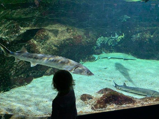写真Aquarium La Rochelle入場券オーディオガイド付き枚