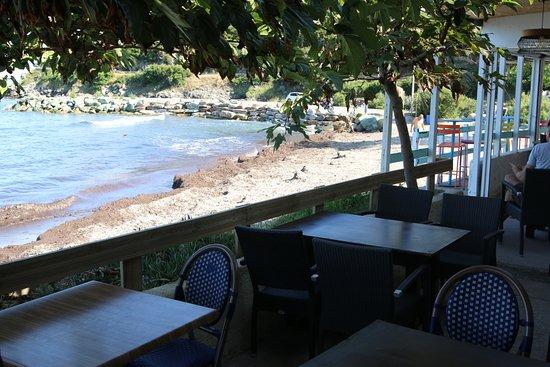Pietracorbara, Frankrike: Vue non agréable car au pied de ce restaurant présence de posidonies