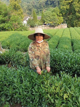 Private Hangzhou Half Day Sightseeing Tour: Meijiawu tea plantation