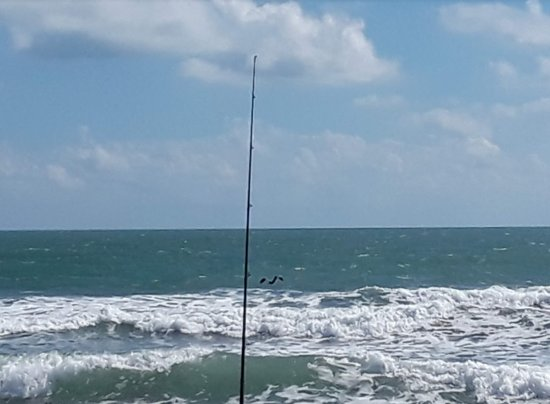 Canaveral National Seashore Parking Area 11 Pelican and Fishing Pole by Florida East Coast Surf Fishing