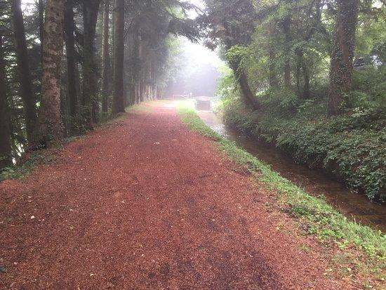 Cette balade de 24 km au départ des Cammazes est extraordinaire. Vous suivez la rigole dans une forêt aux différents visages dans le calme loin de toute civilisation. Au bout de la balade à la Prise d'Alzeau vous pouvez pique-niquer ou manger dans un superbe restaurant