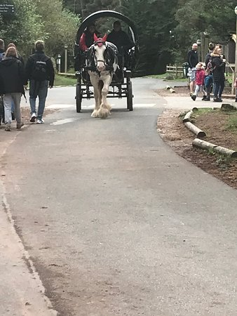 Horse and carriage activity