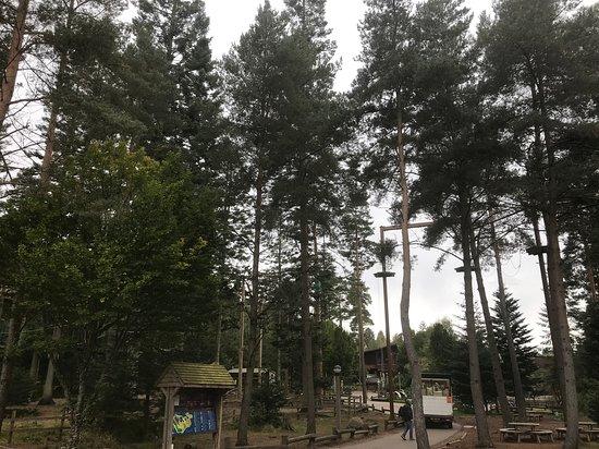 Treetops adventures