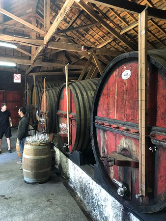 Douro Valley Wine Tour: Visit to Three Vineyards with Wine Tastings and Lunch Φωτογραφία