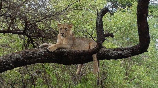 Kimgoni Tanzania Safaris