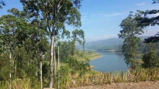 Airport Pick-up (Private) to Kandy: tea country