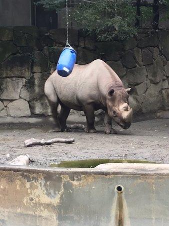 Ueno Zoo Photo