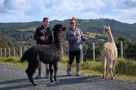 Kandiah Alpacas & Farmstay