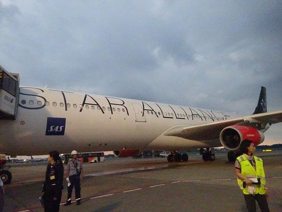 SAS: 成田空港にて
