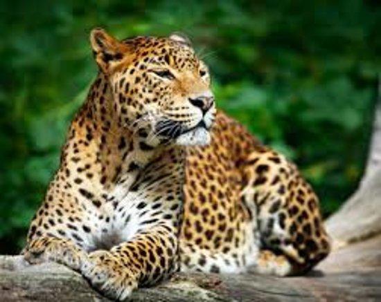yala national park second largest park in sri lanka