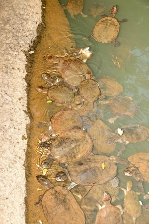 Tarzali, Australië: Turtle soup in the Ithaca River