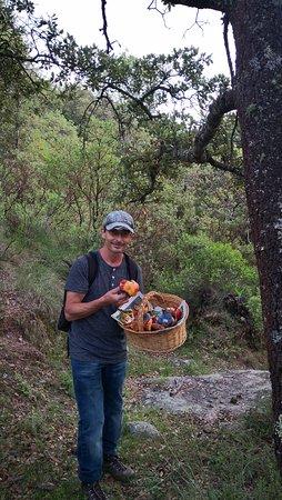 Chef David Jahnke - Mushroom Picking