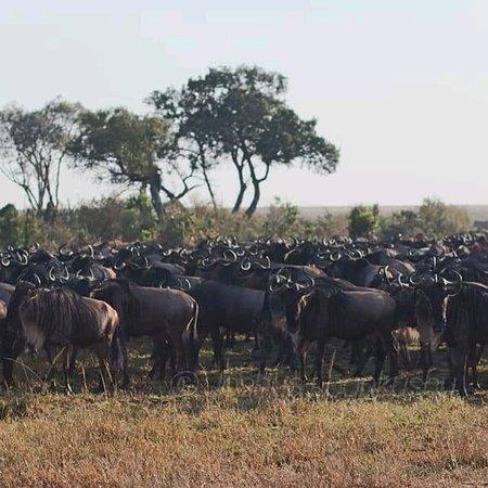 Εθνικό καταφύγιο Μασάι Μάρα, Κένυα: Keekorok Maasai Mara game excursion,www.nixosafaris.co.ke