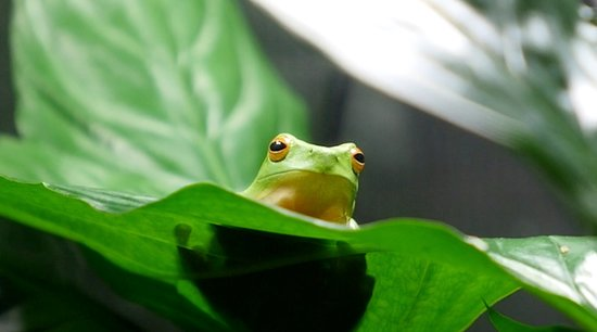 Frog in the Frog Hollow