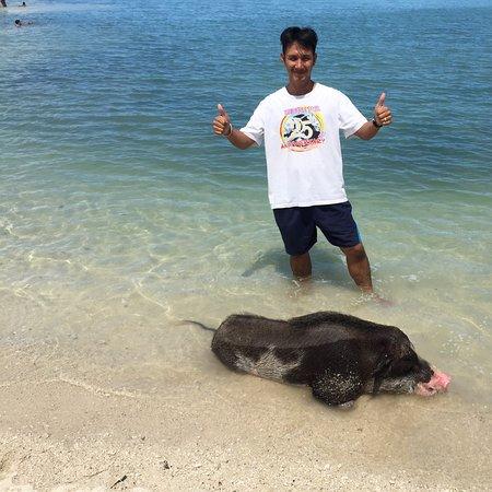 Ko Mat Sum, Tayland: Pig island 🐖🐖🐷🐷🏝🏝