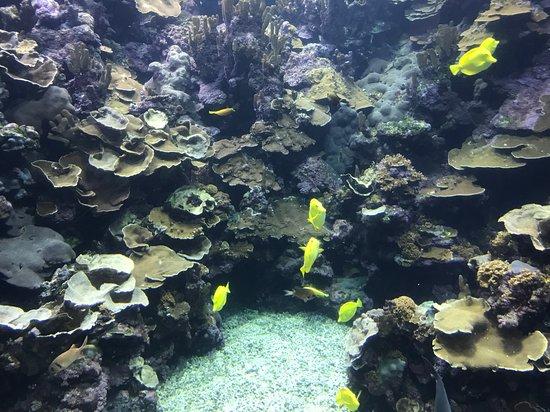 Maui Ocean Center Admission Ticket: Reef fish