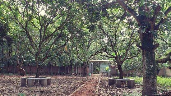 Amrapalli Garden