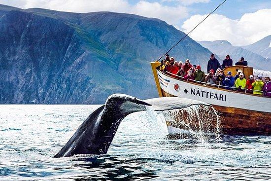 Walvissen spotten aan boord van een ...