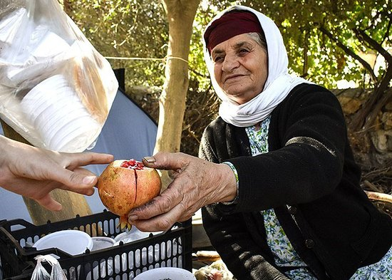 Rudbar, Iran: Pomegranate harvest with local people