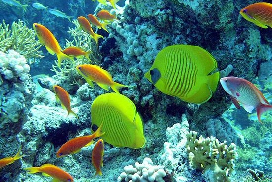 Private 3 hours glass botom boat trip: 2 HOURS PRIVATE SNORKELING TRIP BY A SPEED BOAT FROM HURGHADA