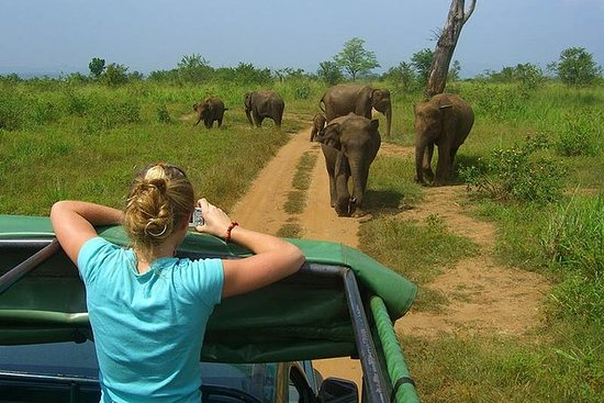 Excursión de un día a Udawalawe desde...