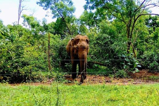 ウダワラウェ国立公園プライベートサファリツアー、オールインクルーシブ