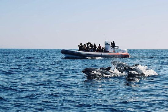 Rib Boat - Dolfijnen & grotten