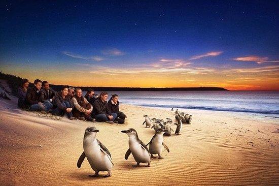 Private Tour: Phillip Island Half-Day...