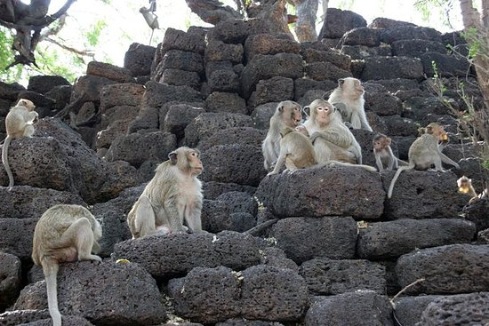 Upptäckten av staden med apor