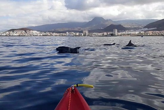 Kayak Tenerife Dophins Experience