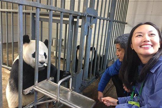 熊猫守护者的经验