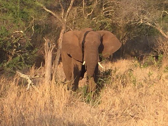 Manyoni Private Game Reserve Foto