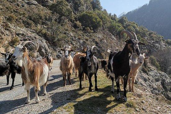 Uvanlig getaway i Prunelli Gorges