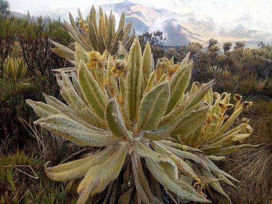 Santa Isabel montaña para...