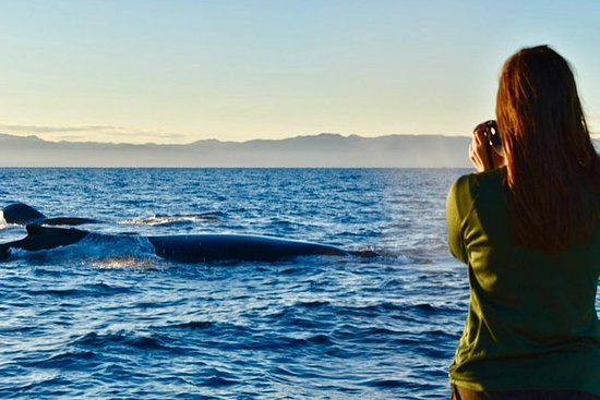 Tour privato della baia (balene / incontri di vita marina